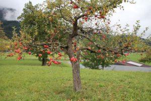 6_verfÅhrerischer_Apfel