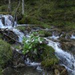 3 Wasserwelt